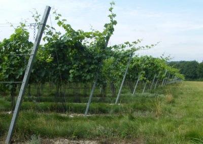 Simpsons Wine Estate – Kent
