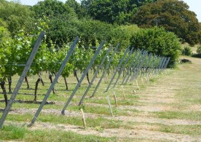 Vignobles et production fruitière