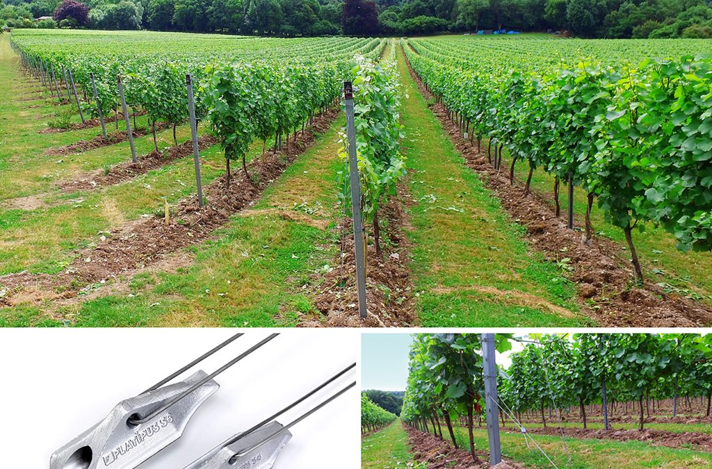 Systemes d'ancrage  au Sol Pour Vignobles